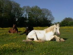 Three horse teachers..